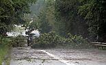 Bäume krachten auf Straßen