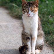 Schüler stürzt in Salzburg wegen Katze vom Rad