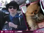 Video – Kelly Osbourne: Schock! Jetzt ist auch noch ihr Hund tot…