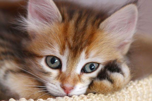 Katzen - wer liebt sie nicht?