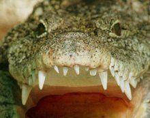Fischer in Australien von Krokodil getötet