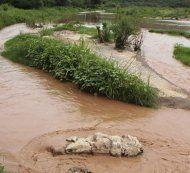 Wasserverseuchung: 80 Schulen geschlossen