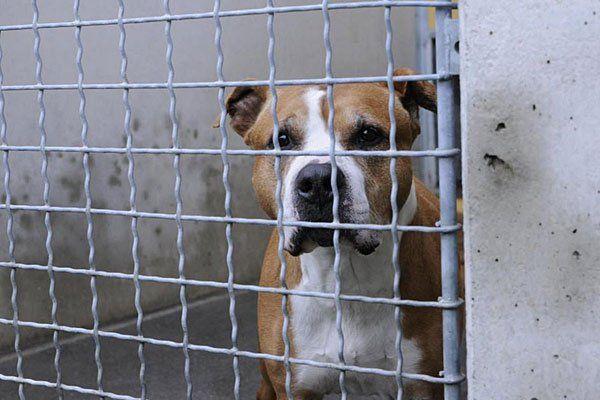 Tiere aus dem Wiener Tierschutzhaus: Vergabe, Schwarze
