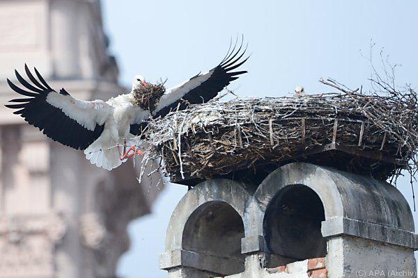 Storchen sollen sich in Rust wohl fühlen