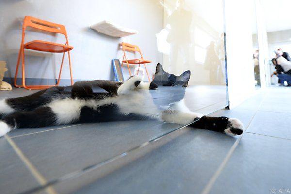 Tierquartier: Platz für 300 Katzen, 150 Hunde und viele Kleintiere
