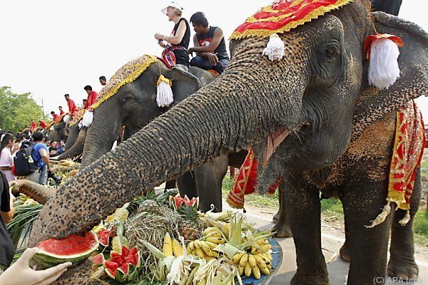 Thailands Elefanten werden verwöhnt