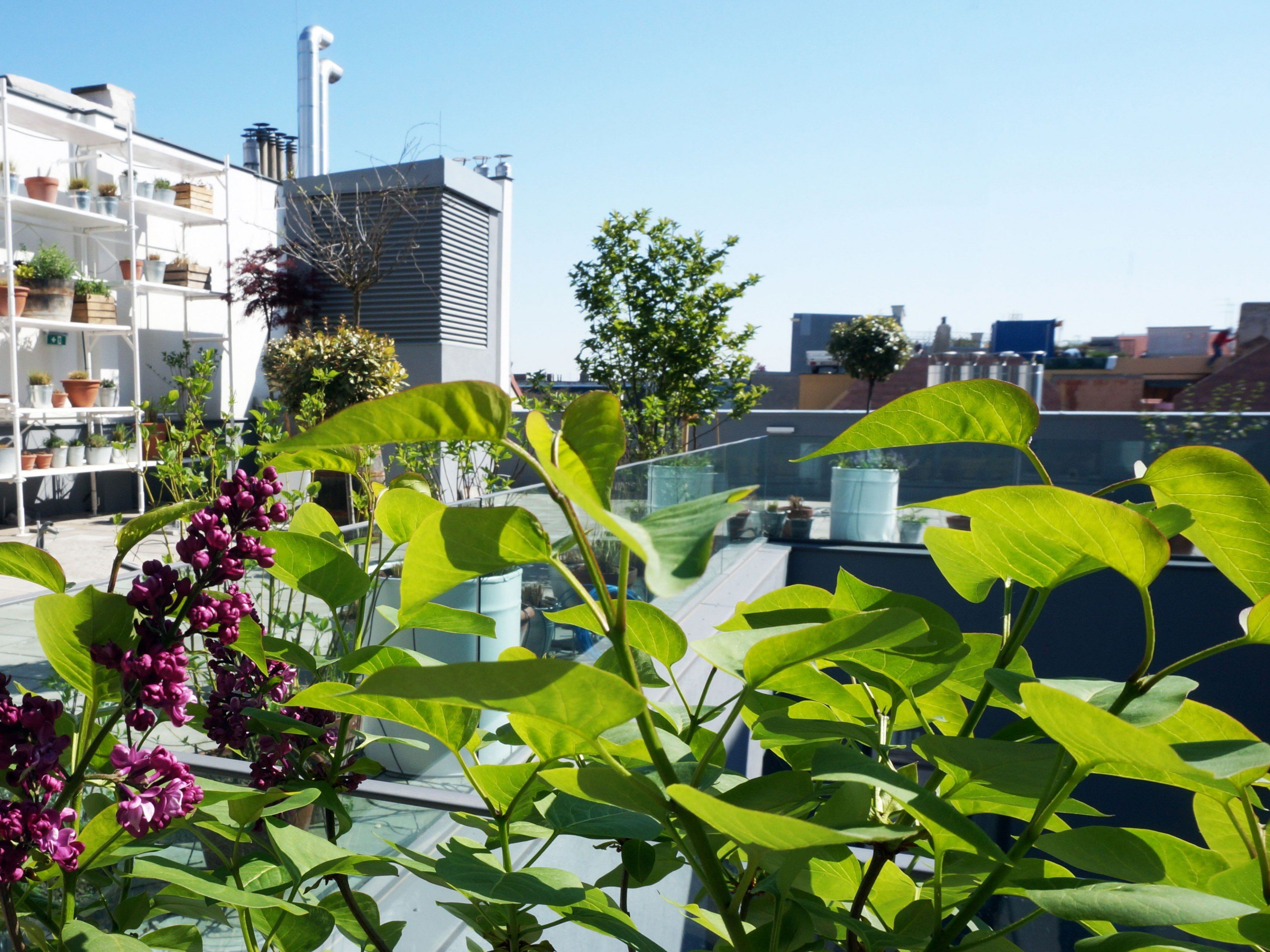 Rooftops: Die Lokale mit den besten Aussichten über Wien - Kulinarik ...