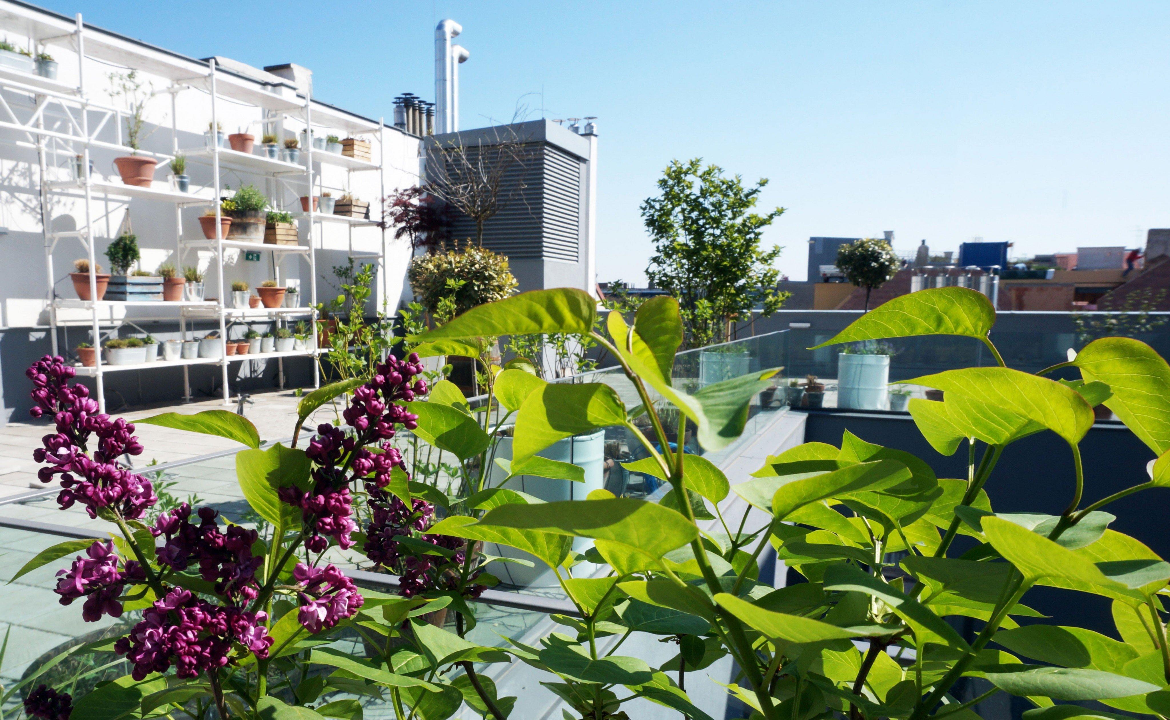 Rooftops: Die Lokale mit den besten Aussichten über Wien | VIENNA.AT