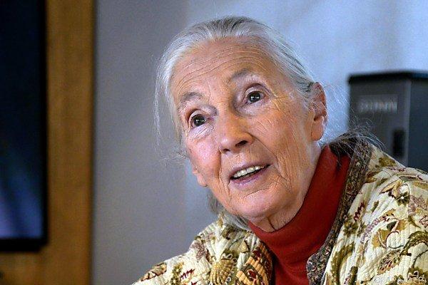 Primatenforscherin und Umweltaktivistin Jane Goodall