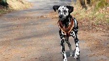 Hund fraß Wurst-Köder mit Rasierklingen-Teilen