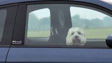 Zwei Hunde starben bei Hitze qualvoll in Auto