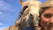 Der liebesbedürftigste Esel der Welt