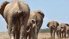 Aktionsplan gegen Wilderei verabschiedet