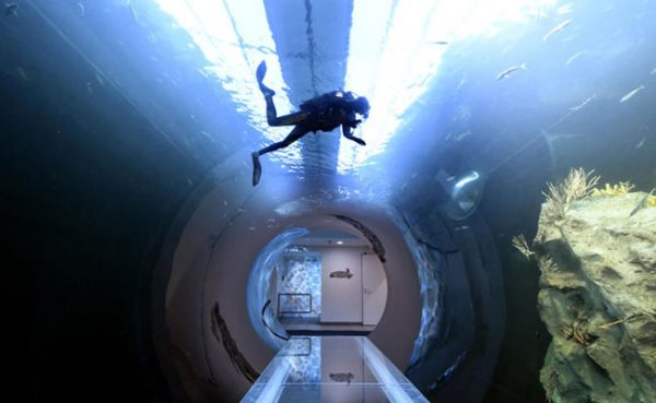 """Neues """"Atlantik-Tunnel""""-Aquarium im Haus des Meeres."""