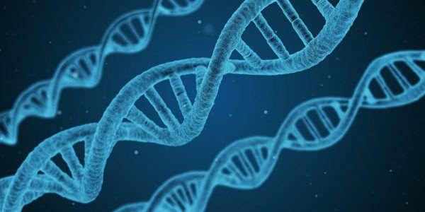 Forscher haben Chimäre aus Mensch und Schwein erschaffen.