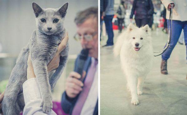 Bei der Haustiermesse Wien gibt es so manches Highlight für Hunde und Katzen