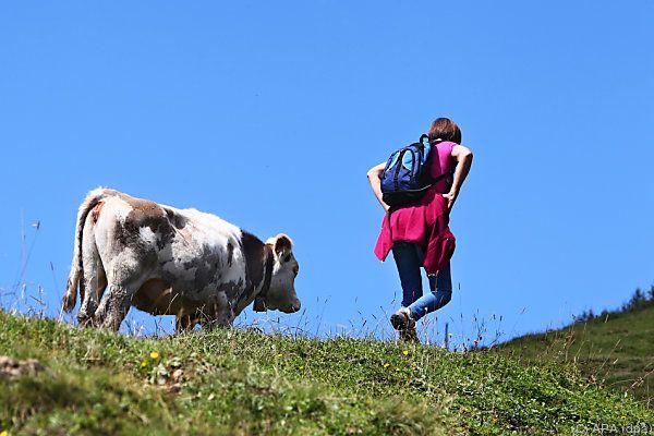 Landwirtschaftskammer appelliert an Eigenverantwortung der Wanderer