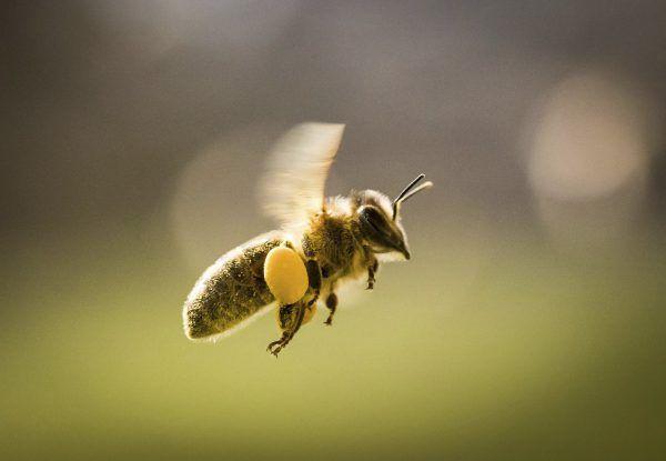Der Frühling bringt wieder einige Probleme für Allergiker mit sich.