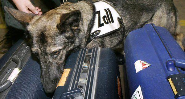 Ein Reptilien-Schmuggler wurde am Flughafen Wien verhaftet