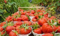 """Pestizide auf Obst: """"Das dreckige Dutzend"""""""