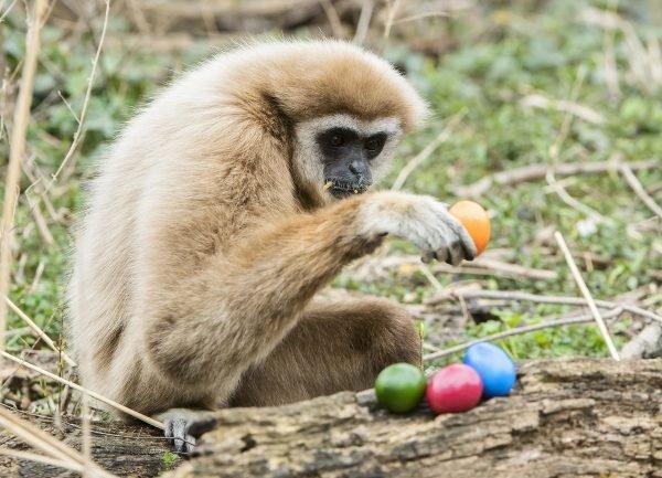 Auch die Affen freuen sich über ihr Osternest.