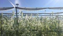 Frostschäden von 50 Mio. Euro für Landwirtschaft