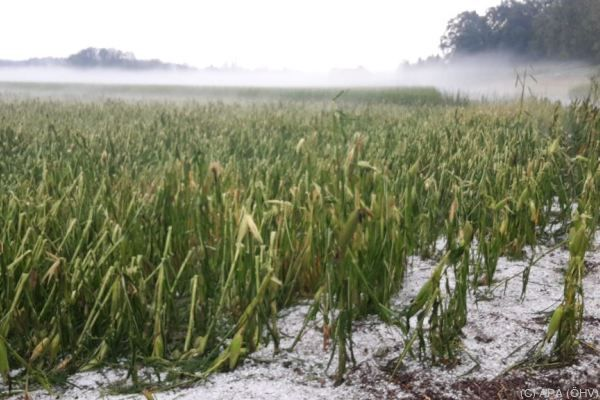 Hagel kann ganze Felder verwüsten