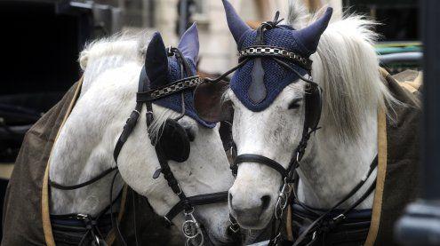 35 Grad erwartet: Fiaker-Pferde könnten hitzefrei bekommen