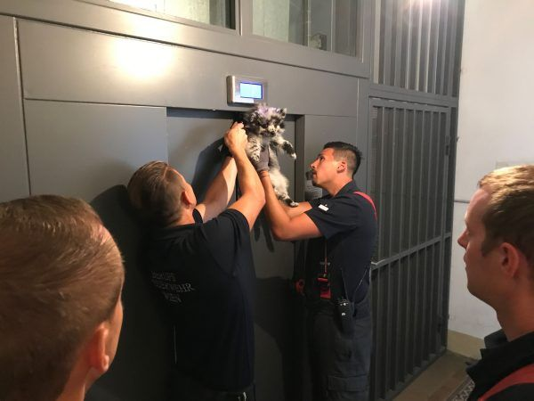 Die Feuerwehrleute fanden den Hund in einer Zwangslage vor