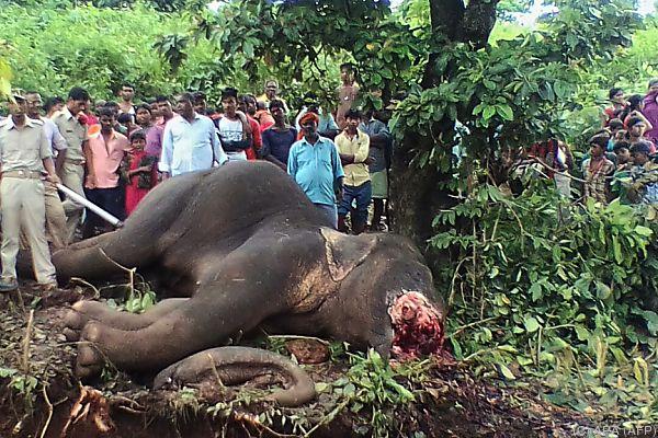 Der Elefant streunte immer wieder durch die Dörfer