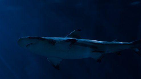 Haiangriff: Niederösterreicherin im Roten Meer schwer verletzt