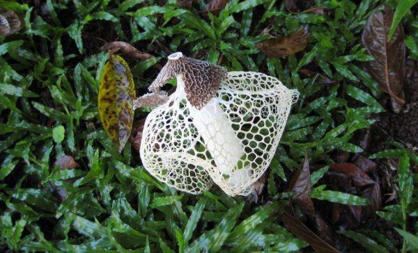 Frauen, die an diesem Pilz riechen, bekommen einen Orgasmus.