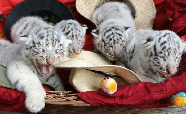 Baby-Boom im Weißen Zoo in Kernhof.