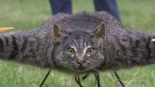 Makaber - Dieser Mann lässt tote Tiere fliegen