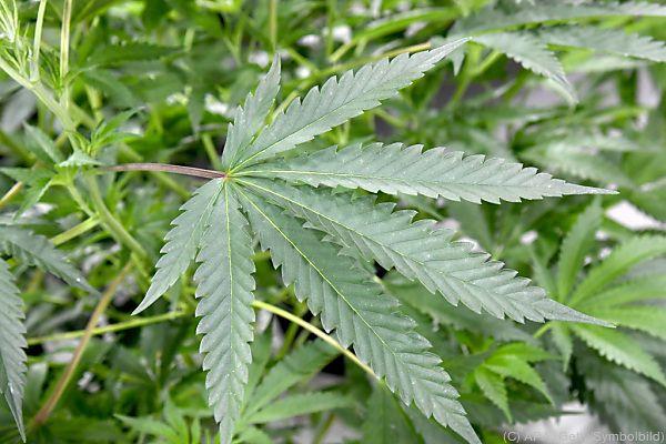 Die Bande soll mindestens 136 Kilo Cannabis verkauft haben