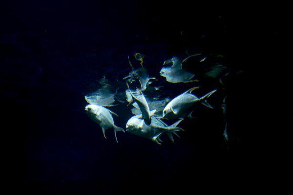 """Auch die Ausstellung """"Meere und Ozeane"""" ist im Rahmen der Forschungswochen NÖ zu sehen."""