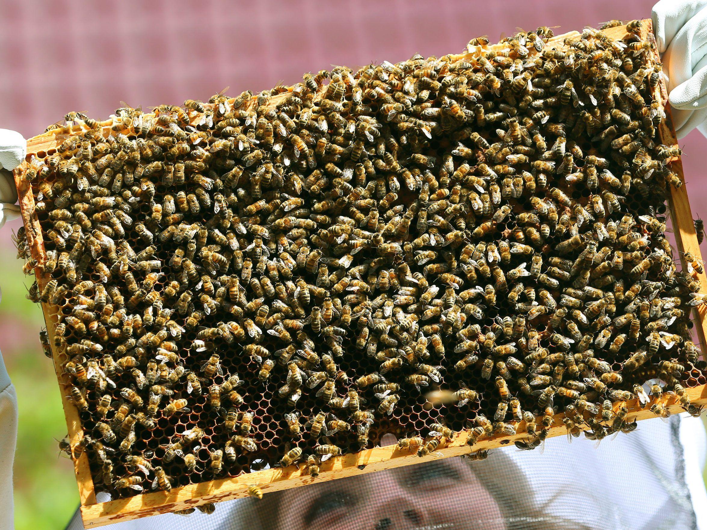 200 Kilo Honig 100000 Bienen Am Dach Der Münze österreich In Wien