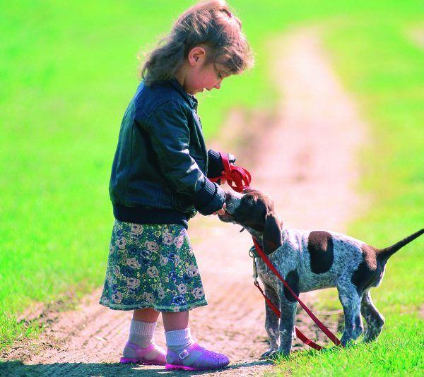 """Verschiedenste Hunde werden bei der Messe """"Du und das Tier"""" zu sehen sein."""