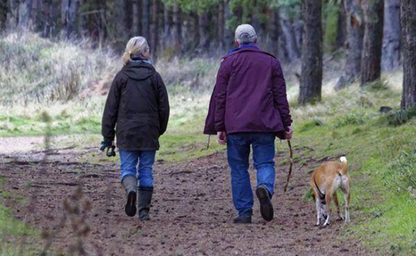 Beim Wandern mit dem Hund sollten einige Regeln beachtet werden.