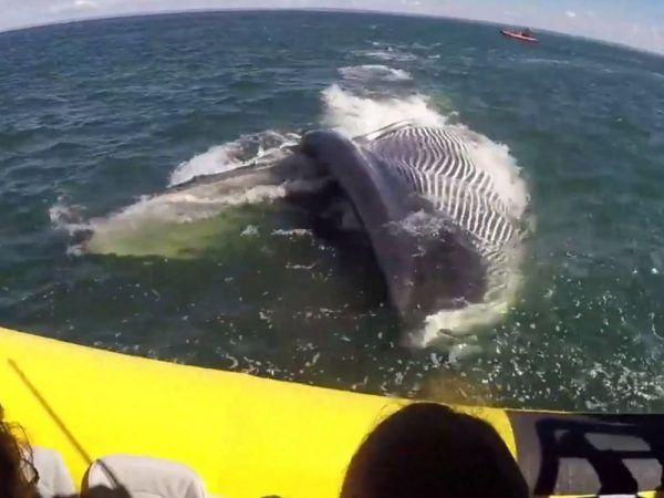Riesiger Finnwal erschreckt Touristen