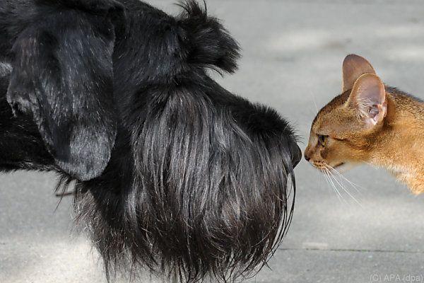 Hund und Katz' sind weiter gefragt