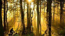 Flora und Fauna leiden an Folgen des Klimawandels