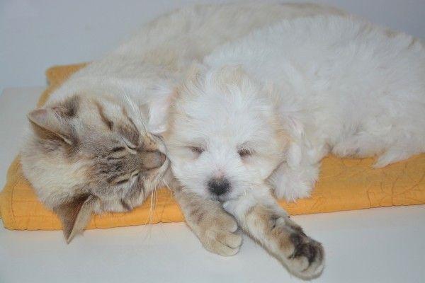 Zum Welttierschutztag: Alles für Hund und Katz´