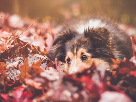 Mit Dem Hund Durch Den Herbst Die Größten Gefahren Für Vierbeiner