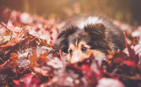 Im Herbst können Pilze und Kastanien für Hunde zur Gefahr werden.
