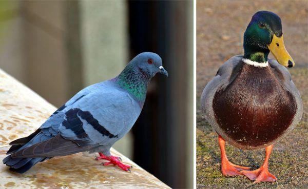 Tauben und Vögel wurden in Schachteln in einer Wiener Wohnung gehalten