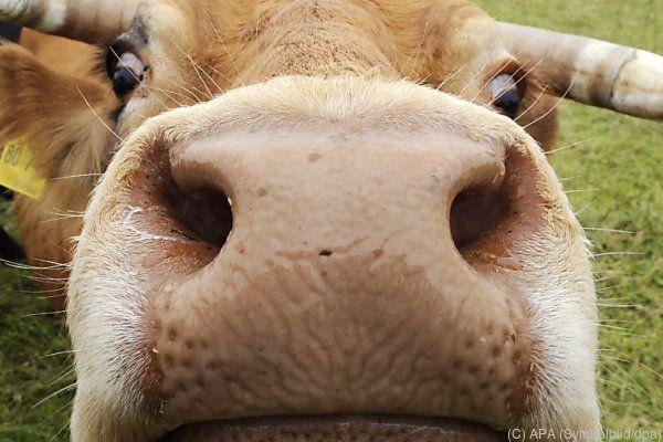 Weniger Fleischkonsum ist einer der Maßnahmen