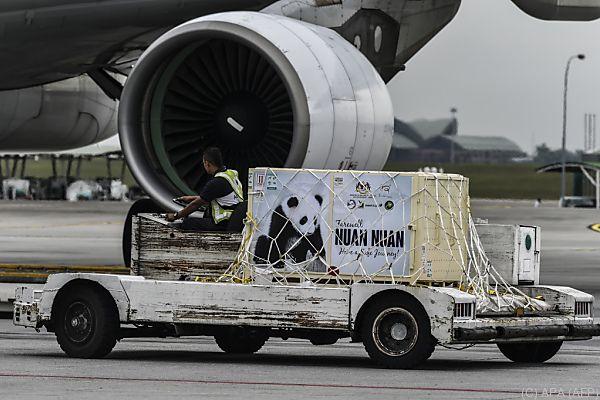 Nuan Nuan wurde via Flugzeug transportiert