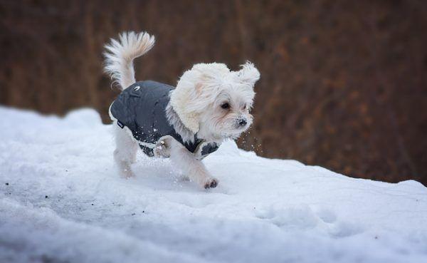 Streusalz und Rollsplit können Hundepfoten in Mitleidenschaft ziehen.