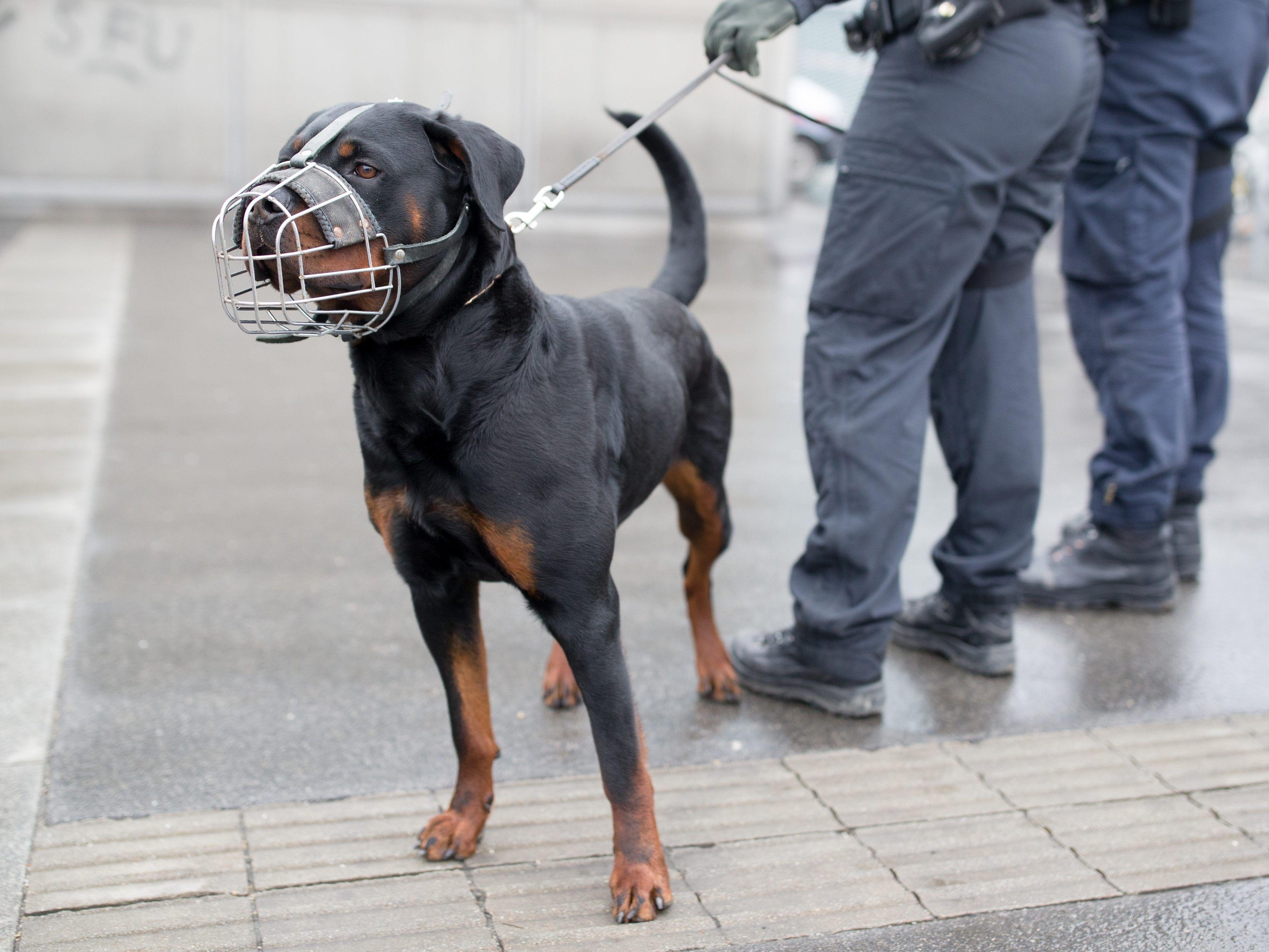 Drogendealer bei Schwerpunktaktion in Wien festgenommen 7a10b1ba148